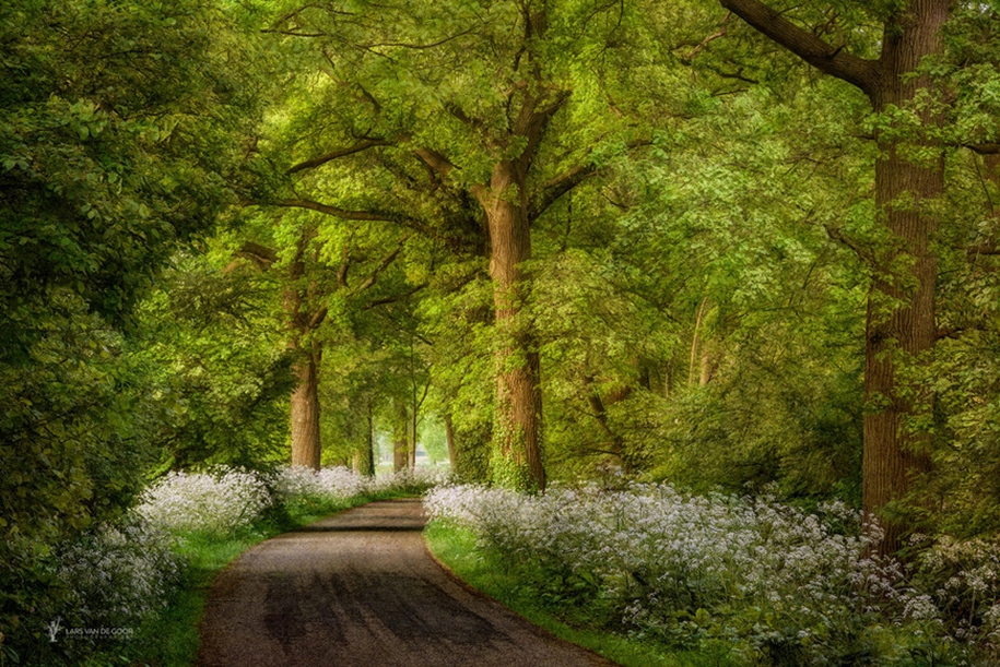 The beauty of the forest landscape from Dutchman Lars van de Gur 13