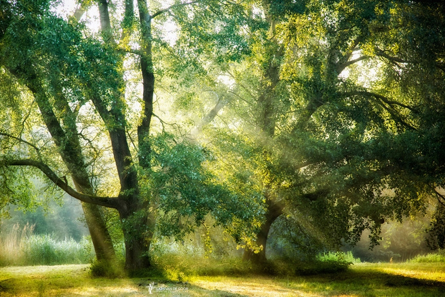 The beauty of the forest landscape from Dutchman Lars van de Gur 18