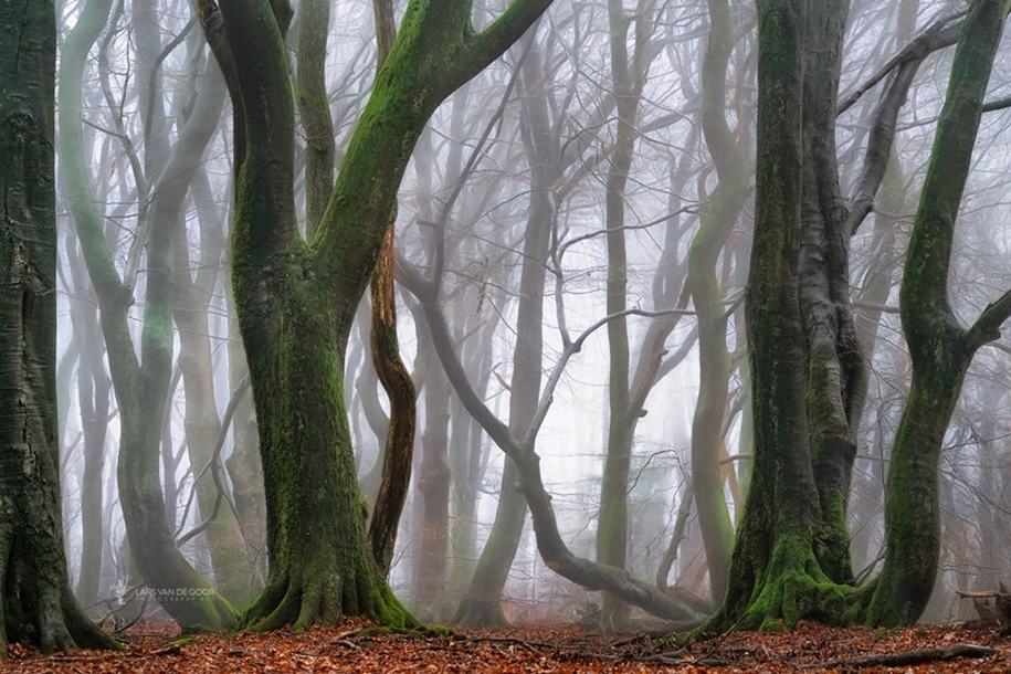 The beauty of the forest landscape from Dutchman Lars van de Gur 19