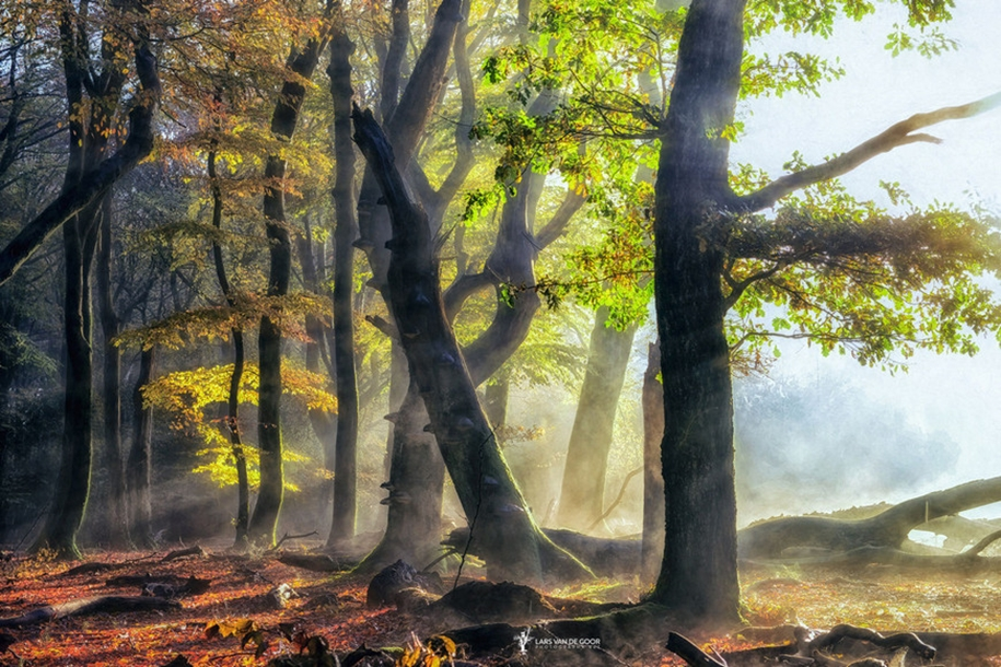 The beauty of the forest landscape from Dutchman Lars van de Gur 20