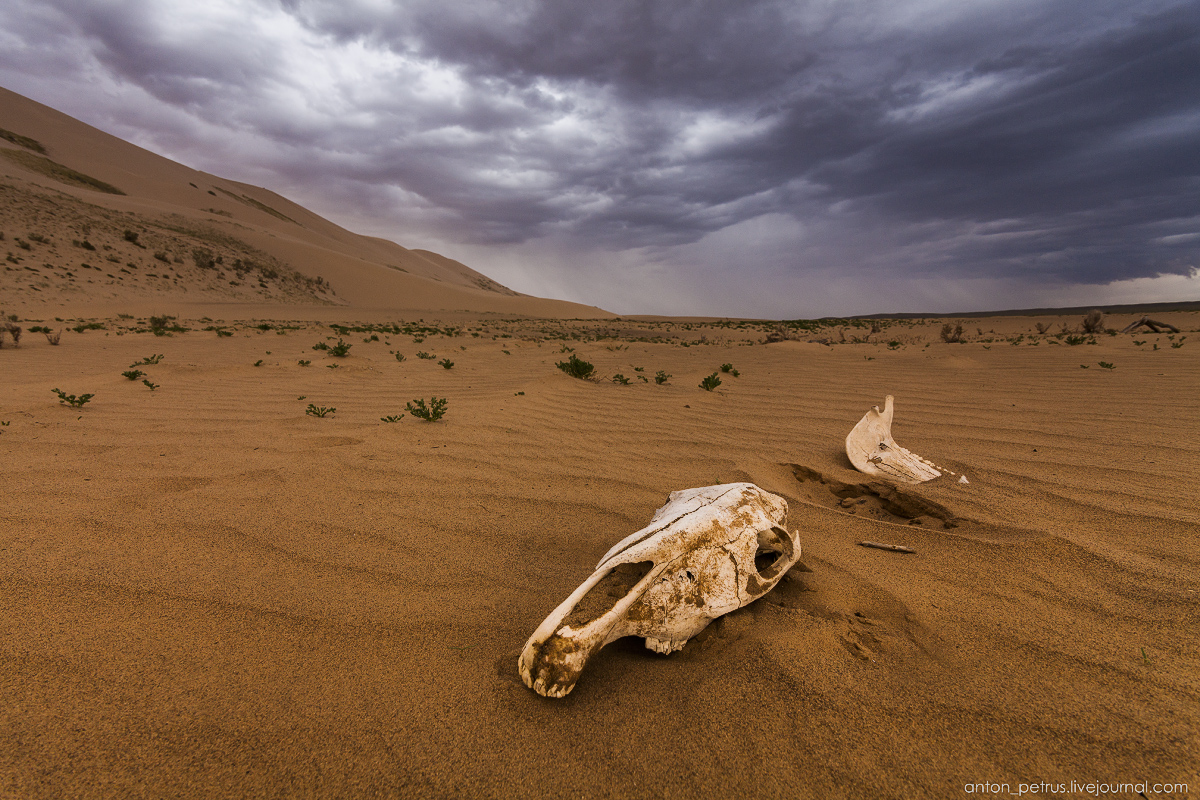 Unique landscapes of the Gobi desert 02