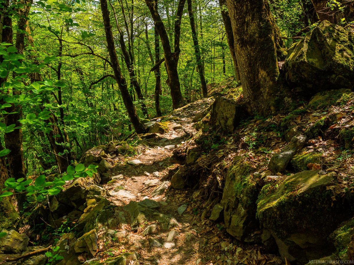 Walk through the forests of the Krasnaya Polyana 04