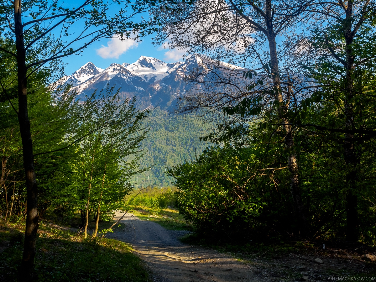 Walk through the forests of the Krasnaya Polyana 10