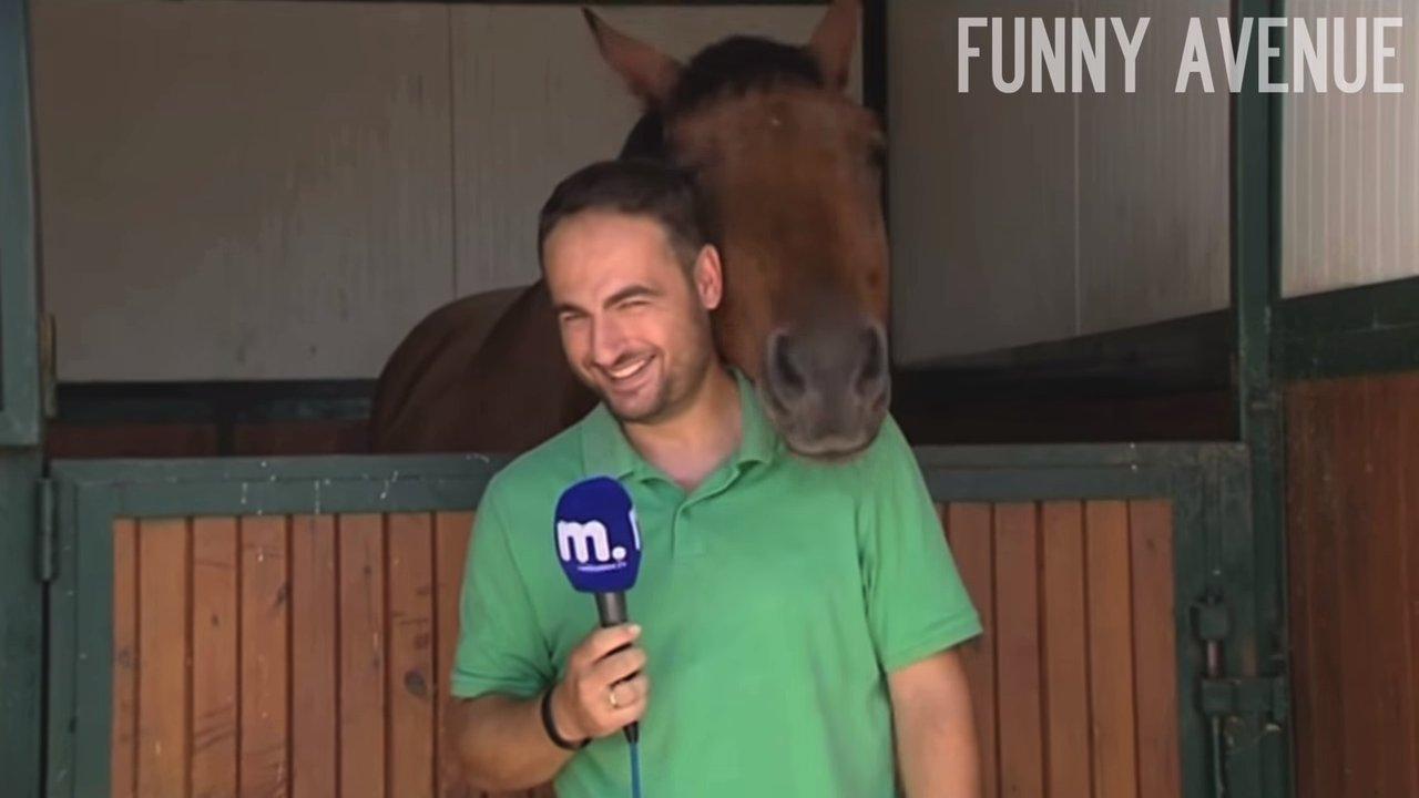 Infinitely gentle horse did not give the journalist to finish the story