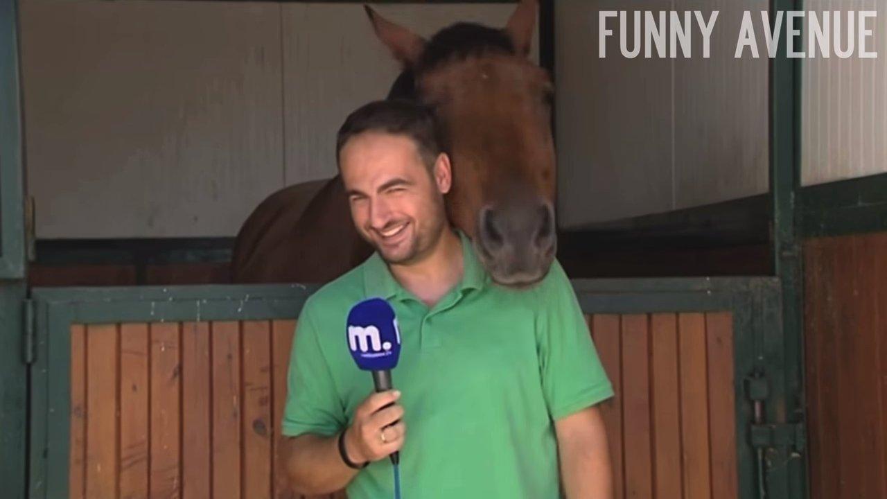 Безгранично ласковая лошадь не дала журналисту закончить репортаж