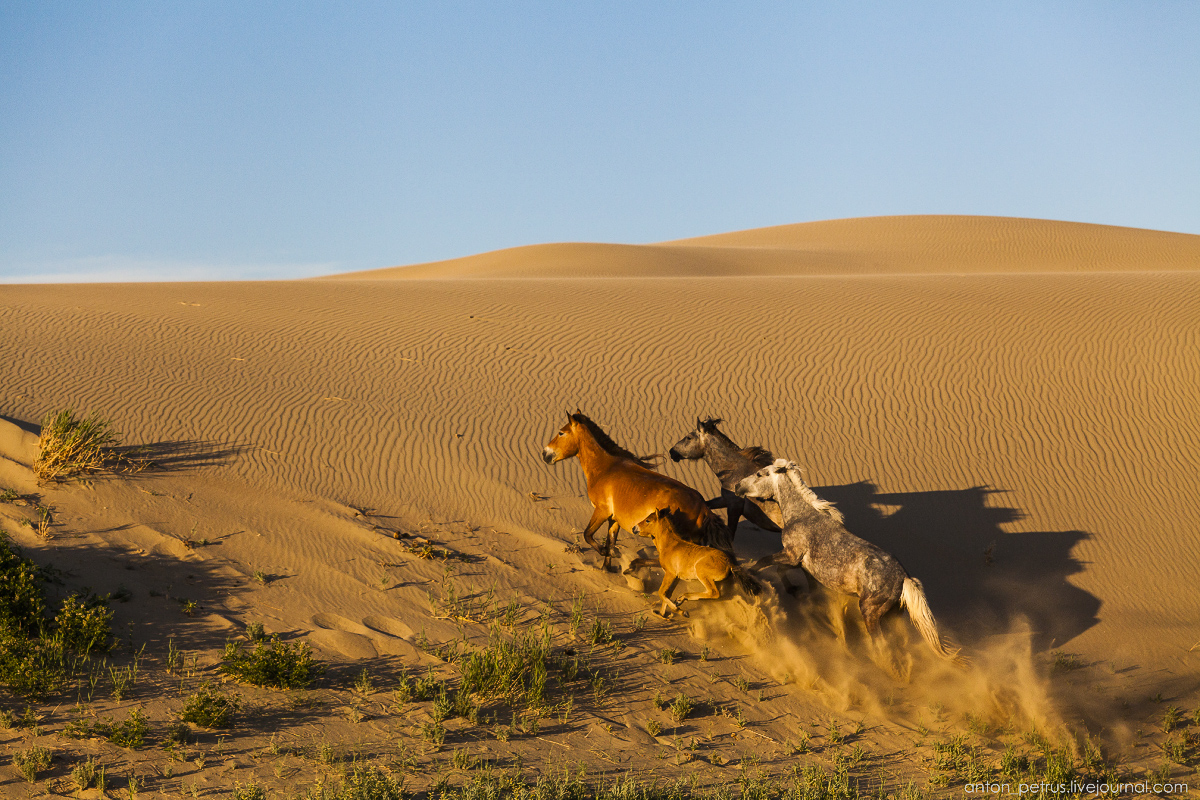 Mongolia in scenery from desert to mountain lakes 04