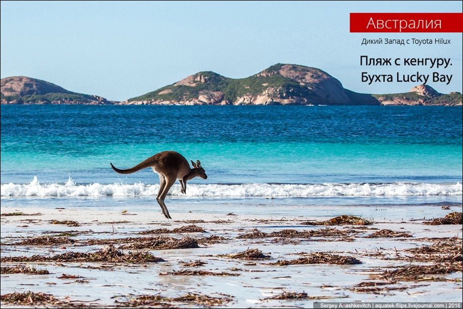 a-beach-with-a-kangaroo-one-of-the-most-famous-places-in-australia-00