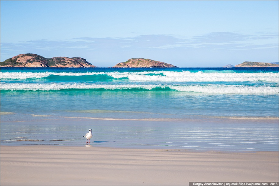 a-beach-with-a-kangaroo-one-of-the-most-famous-places-in-australia-08