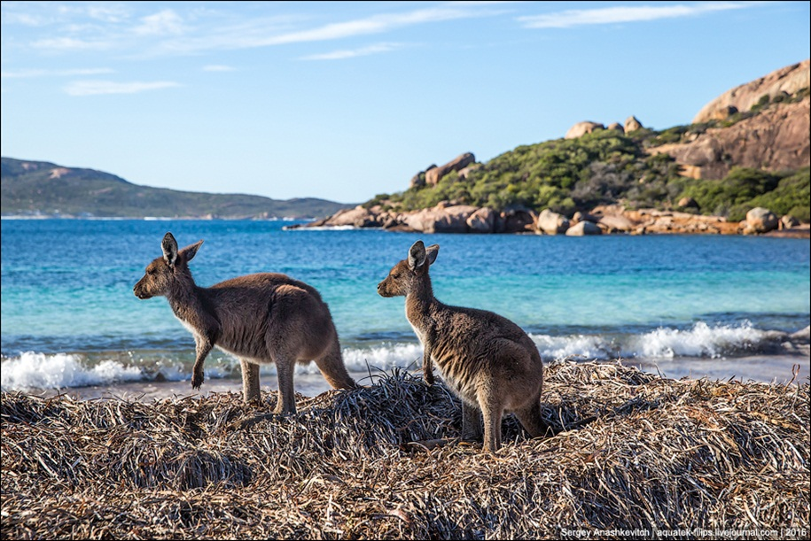 a-beach-with-a-kangaroo-one-of-the-most-famous-places-in-australia-10
