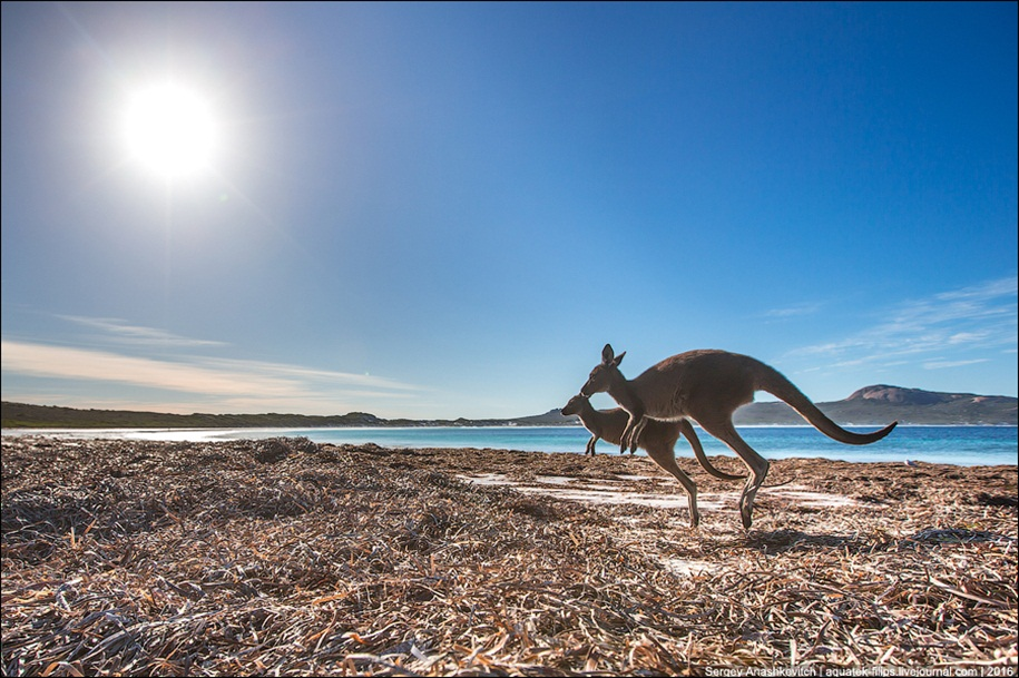 a-beach-with-a-kangaroo-one-of-the-most-famous-places-in-australia-11