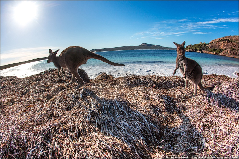 a-beach-with-a-kangaroo-one-of-the-most-famous-places-in-australia-12