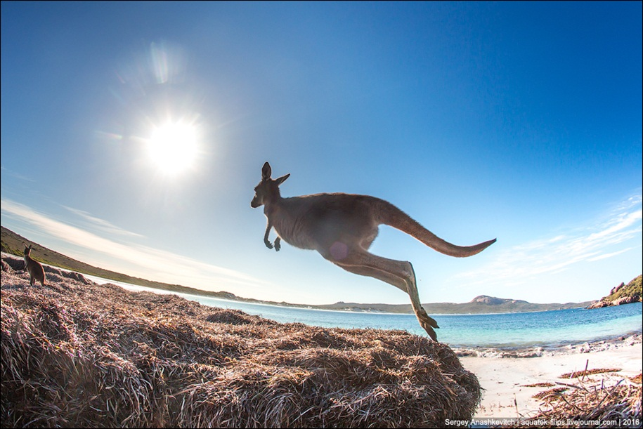 a-beach-with-a-kangaroo-one-of-the-most-famous-places-in-australia-13