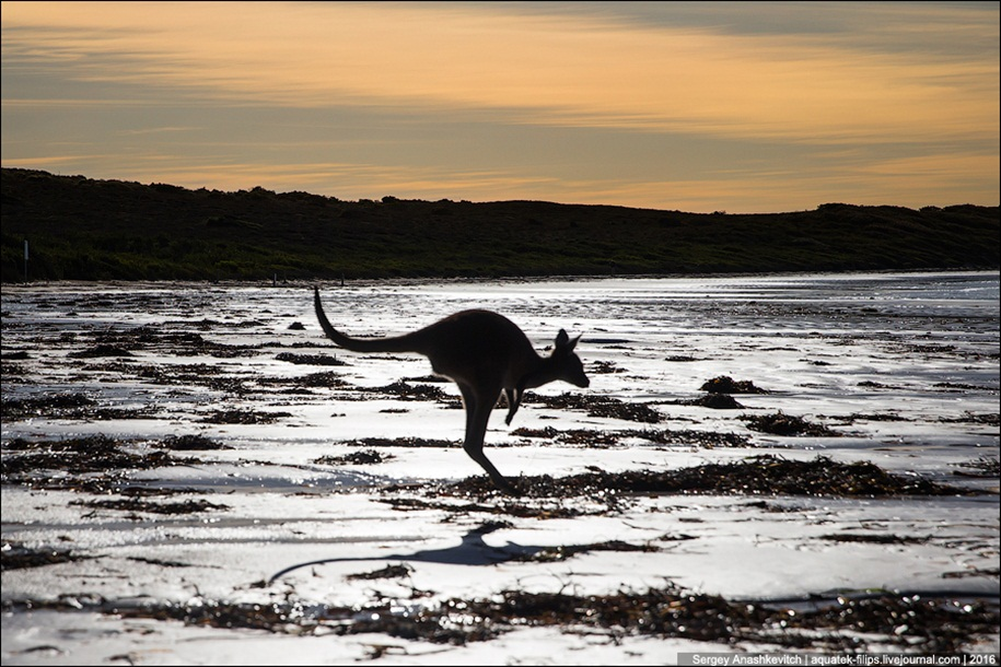 a-beach-with-a-kangaroo-one-of-the-most-famous-places-in-australia-17