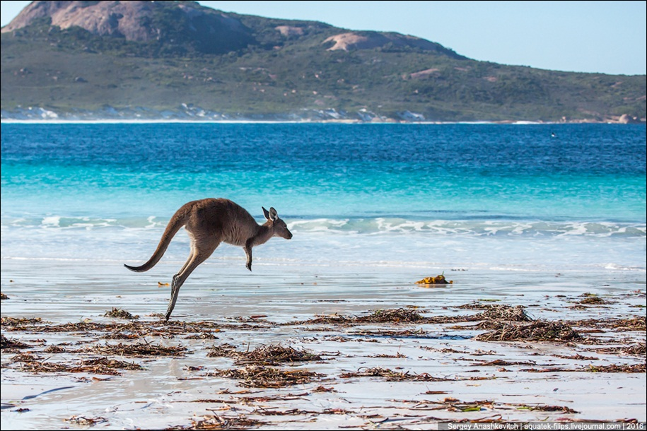 a-beach-with-a-kangaroo-one-of-the-most-famous-places-in-australia-18