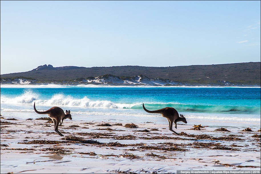 a-beach-with-a-kangaroo-one-of-the-most-famous-places-in-australia-19