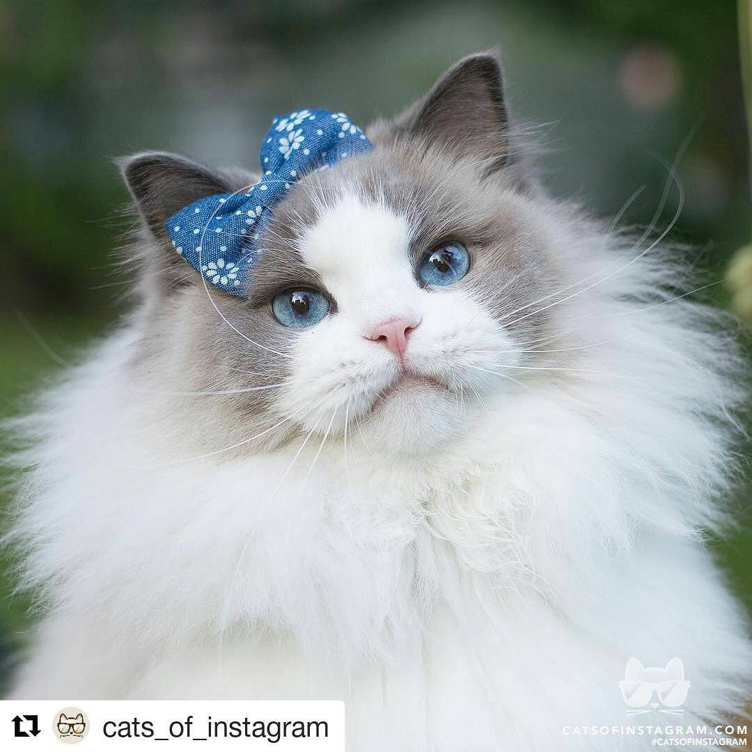 a-cat-named-princess-aurora-became-the-new-star-of-instagram-00