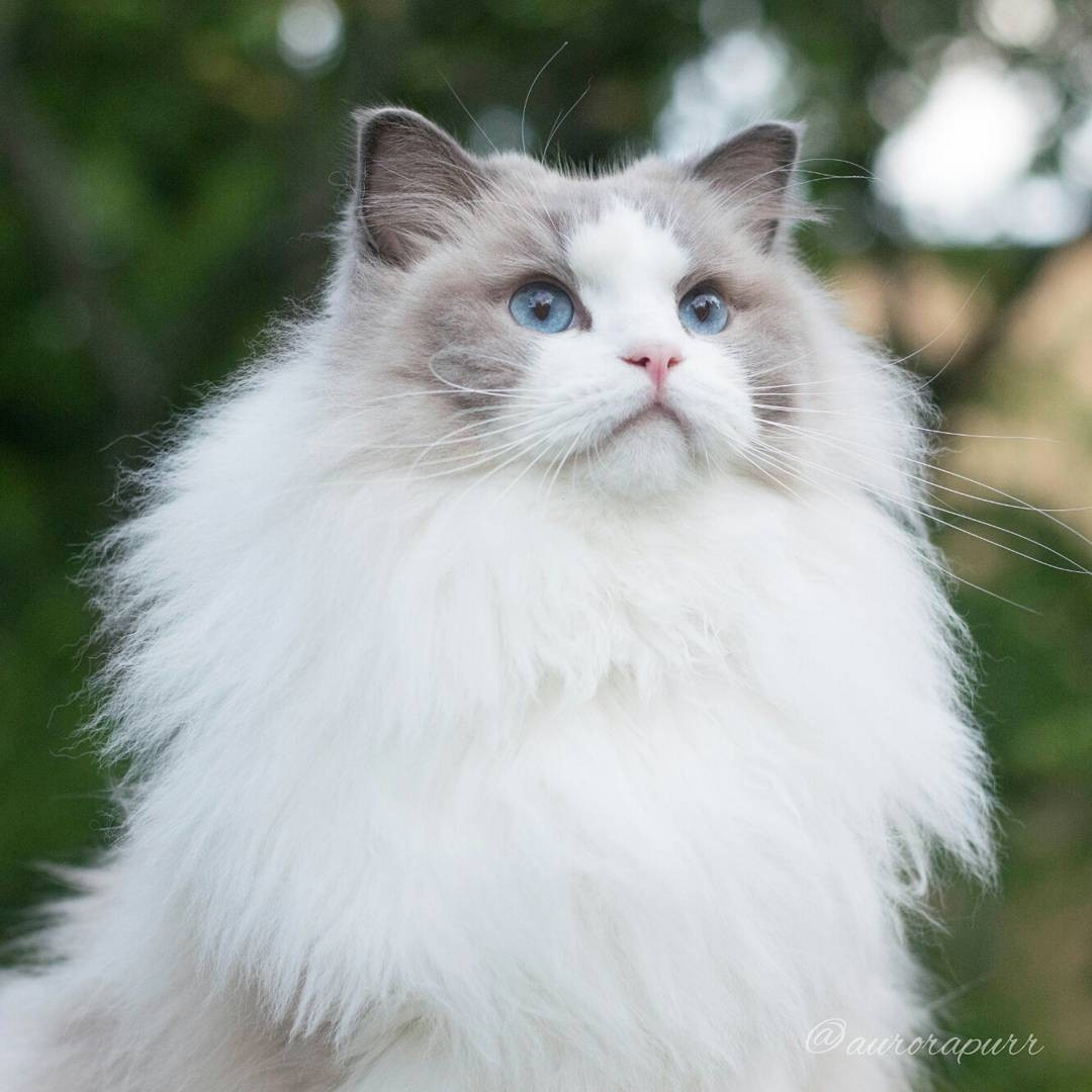 a-cat-named-princess-aurora-became-the-new-star-of-instagram-01