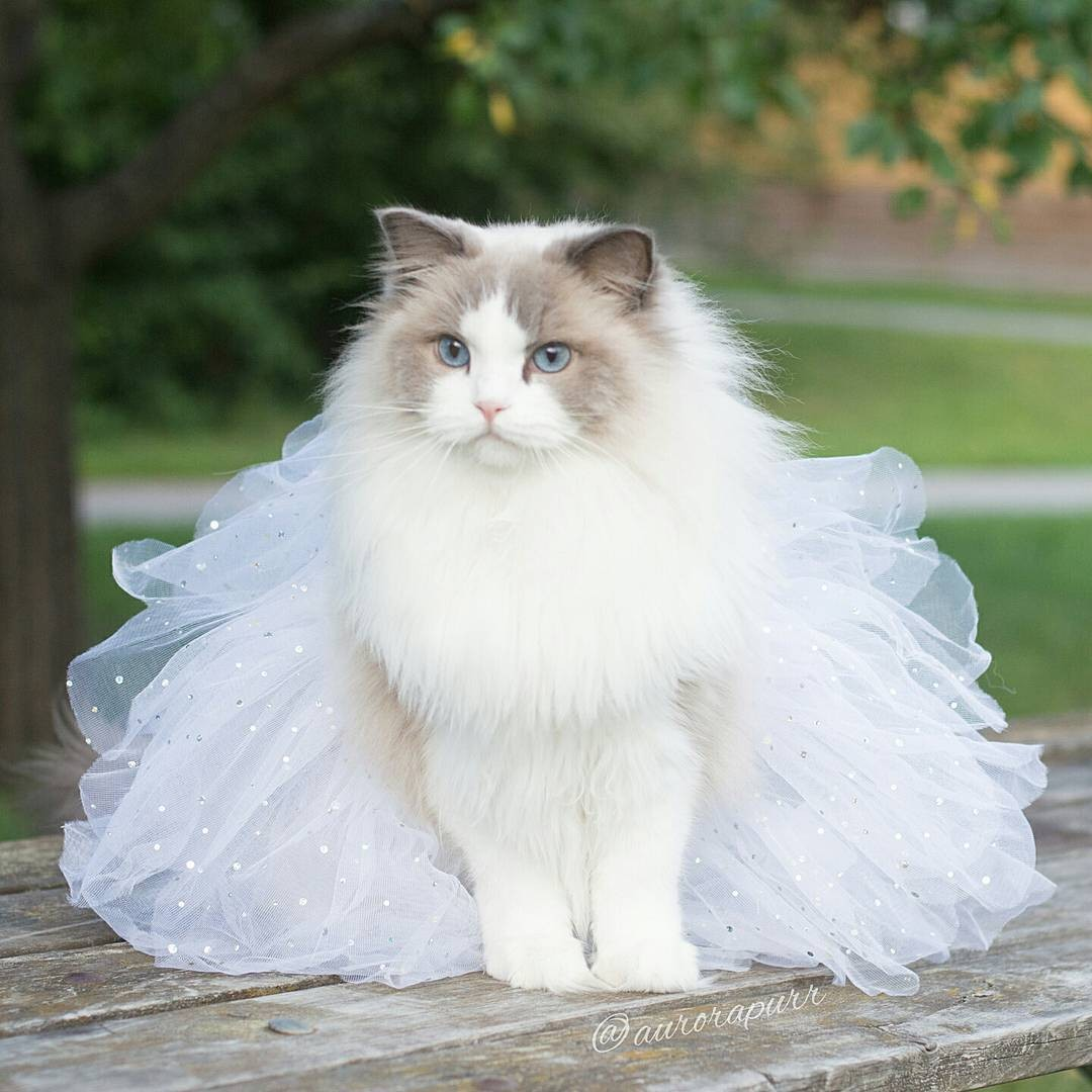 a-cat-named-princess-aurora-became-the-new-star-of-instagram-08