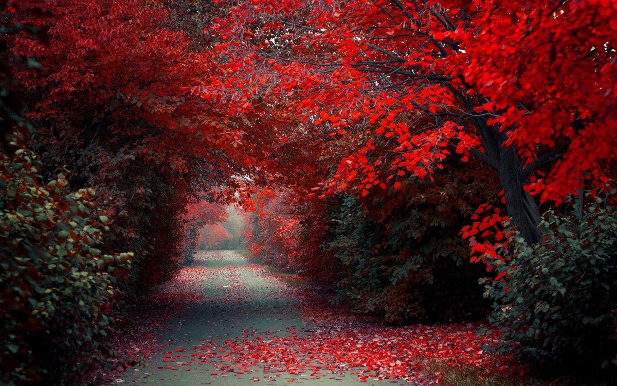 beautiful-scenery-05