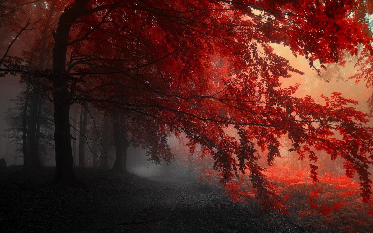 beautiful-scenery-08
