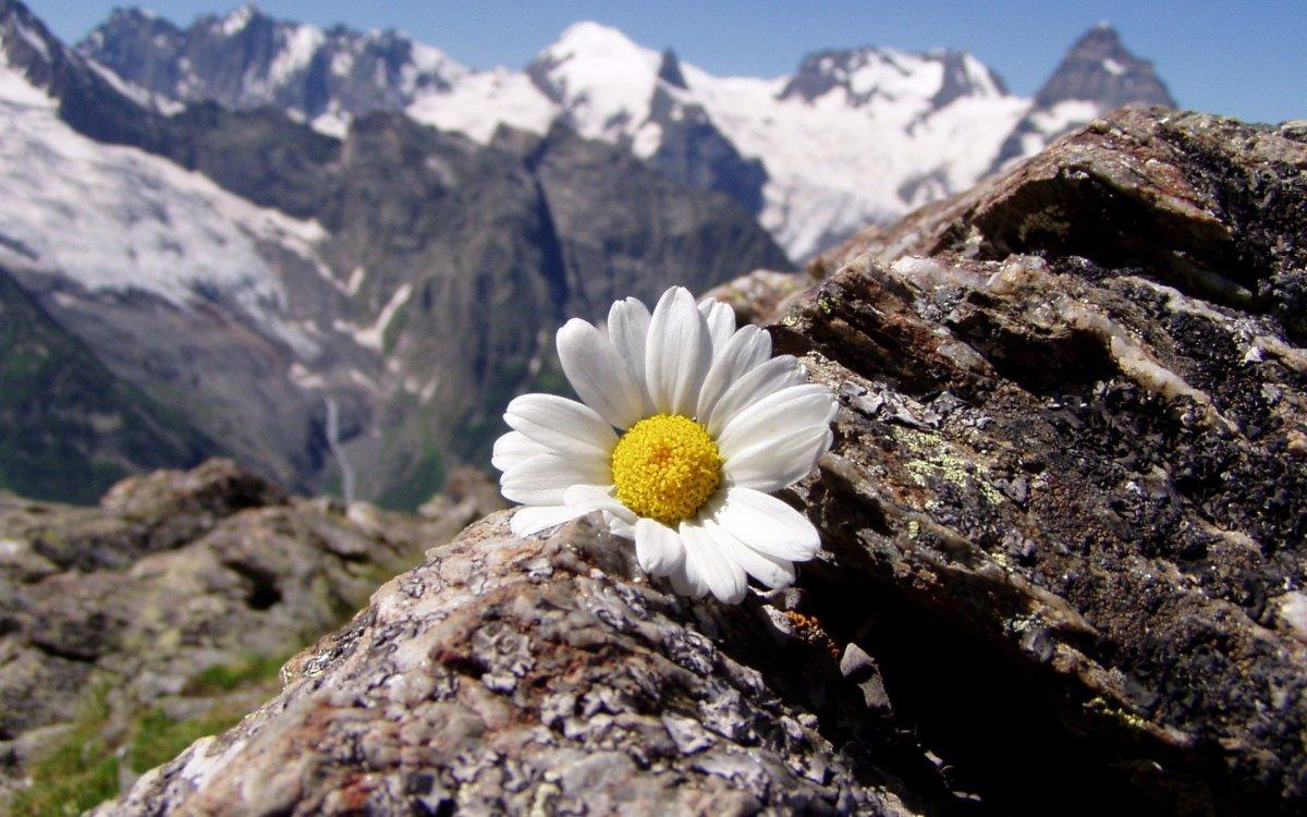 beautiful-scenery-13