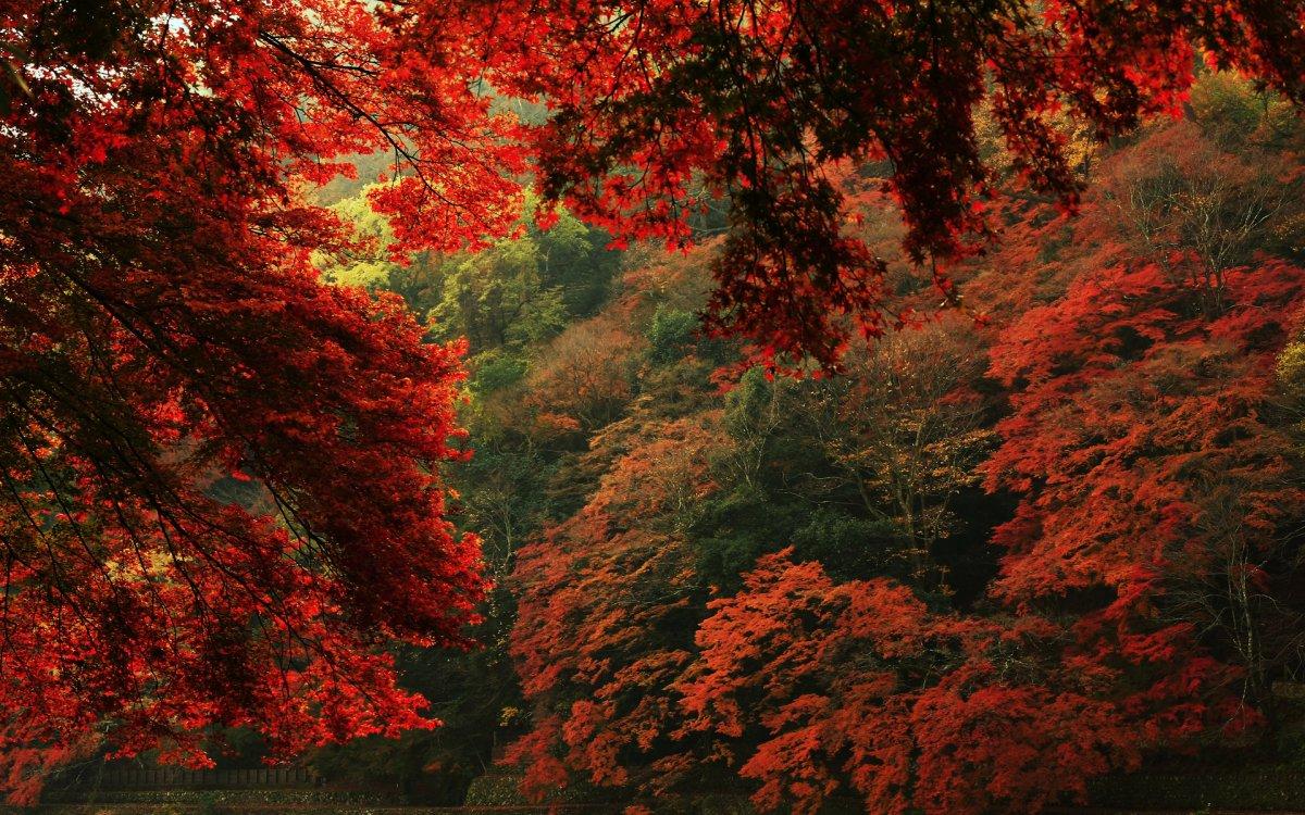 beautiful-scenery-23