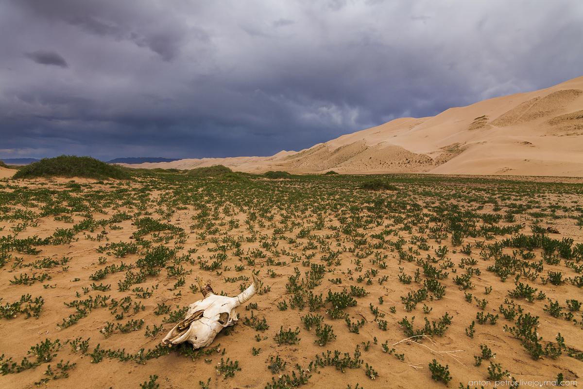 Desert storm 03
