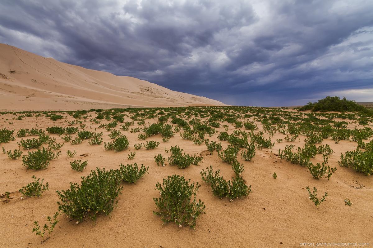Desert storm 05