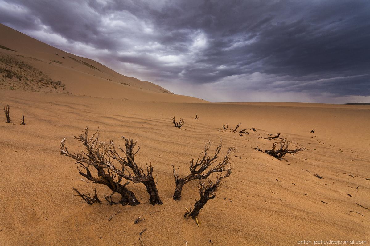 Desert storm 12