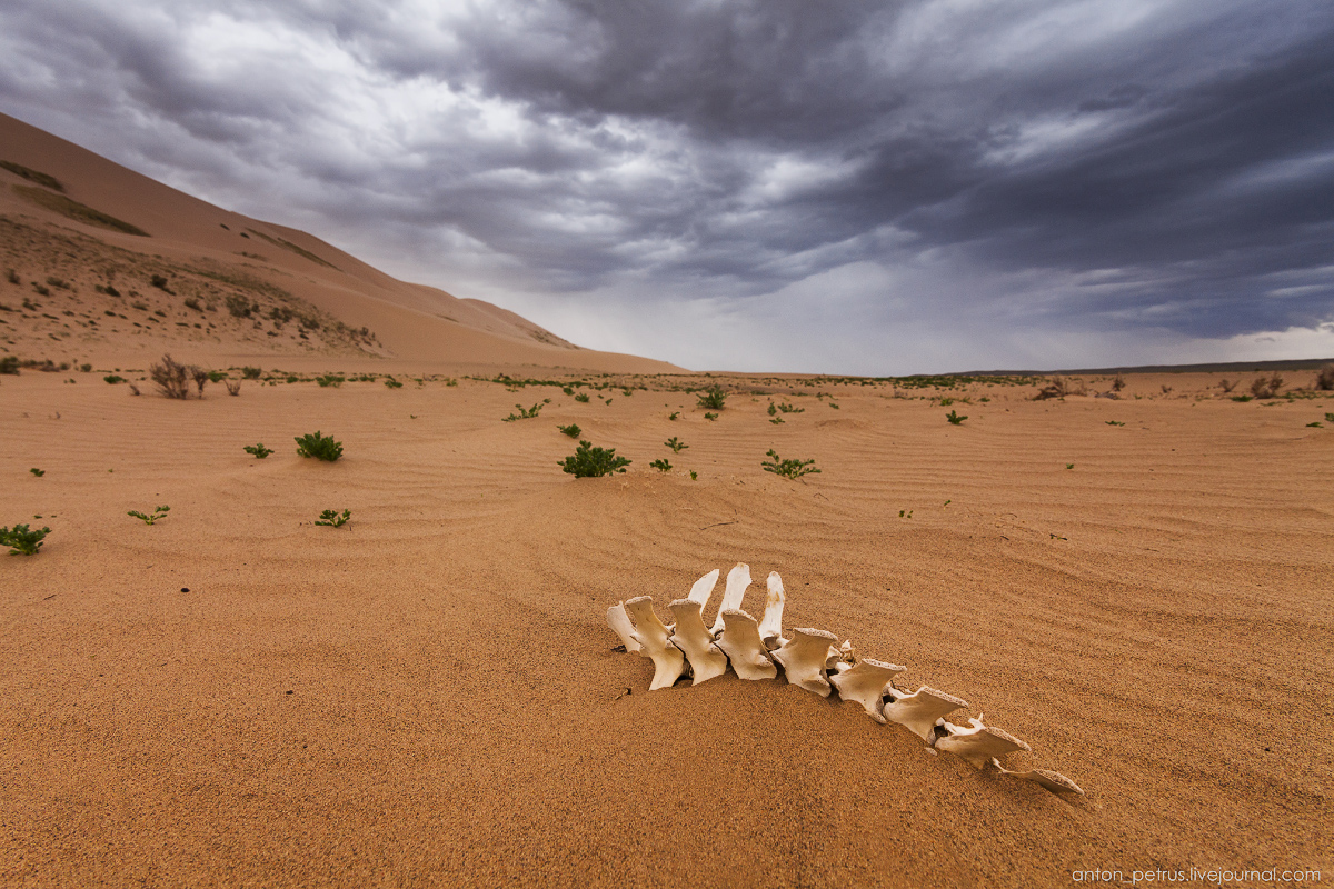 Desert storm 13