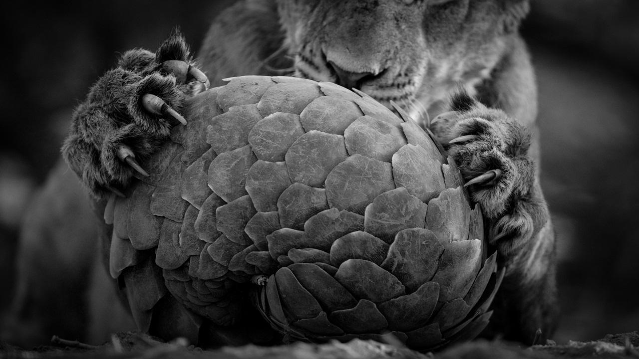 Photo contest wildlife 2016-04