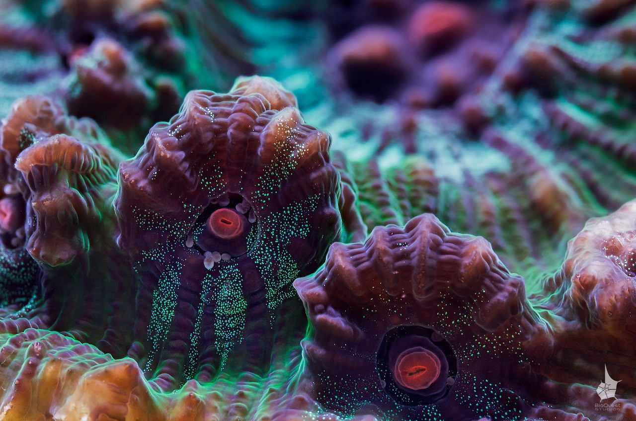 The wonders of underwater life 09
