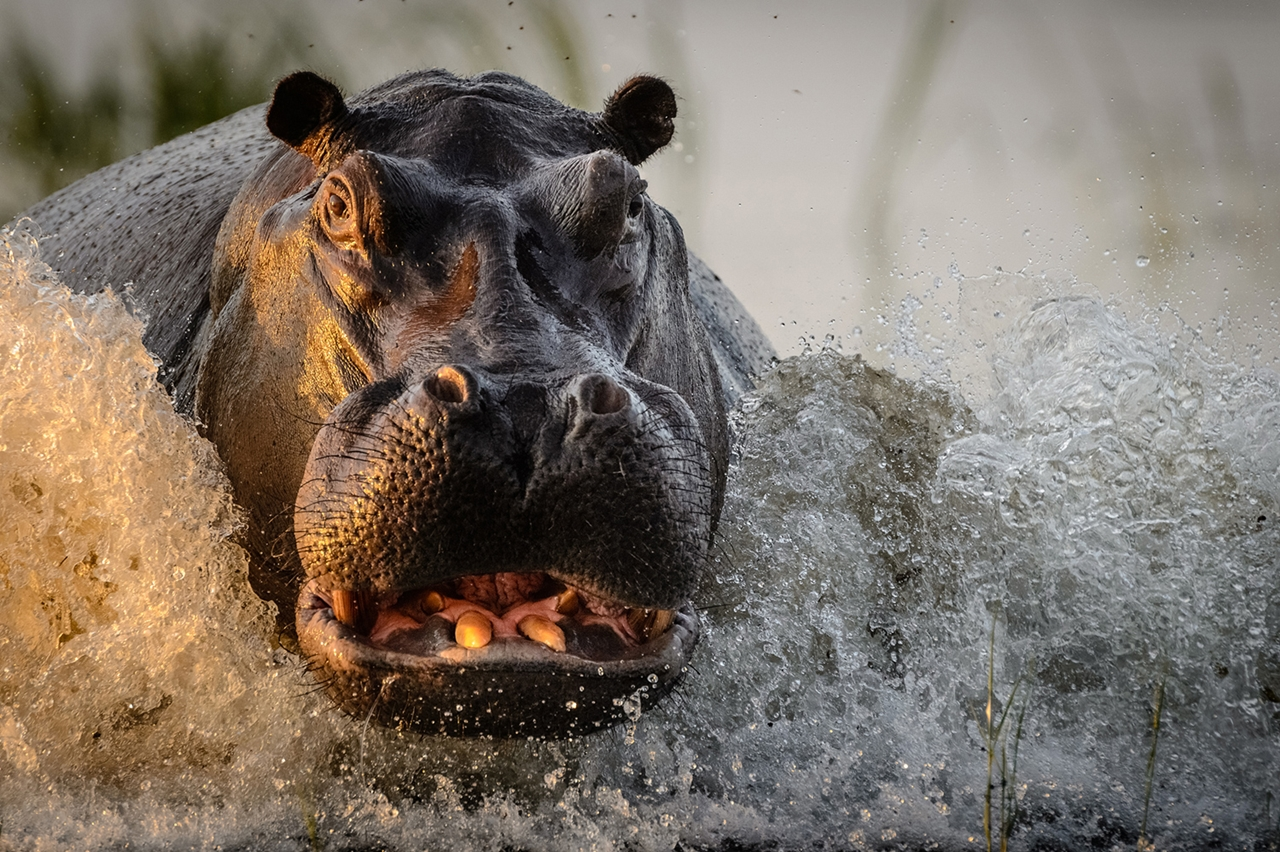2016-national-geographic-nature-photographer-of-the-year-contest-22