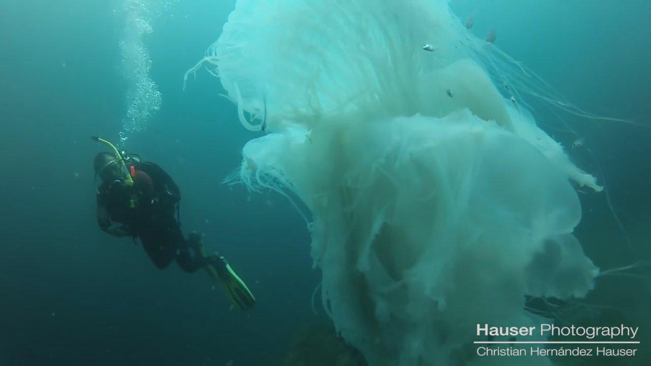 Удивительная и опасная встреча дайверов с огромной медузой