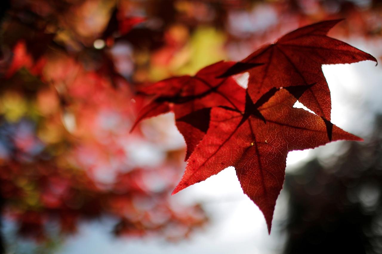 autumn-2016_16
