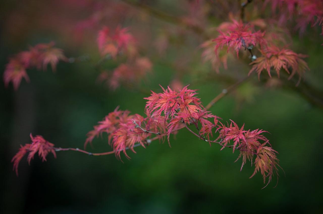autumn-2016_22