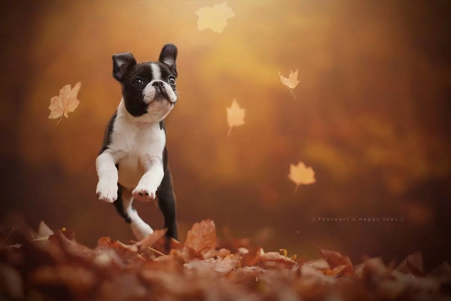 autumn-dog-photos-anne-geyer-01