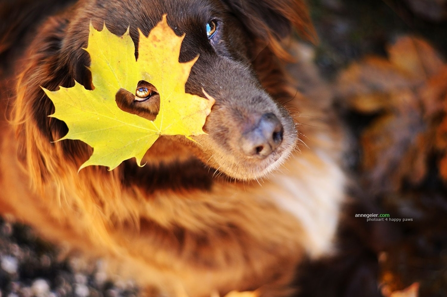 autumn-dog-photos-anne-geyer-02
