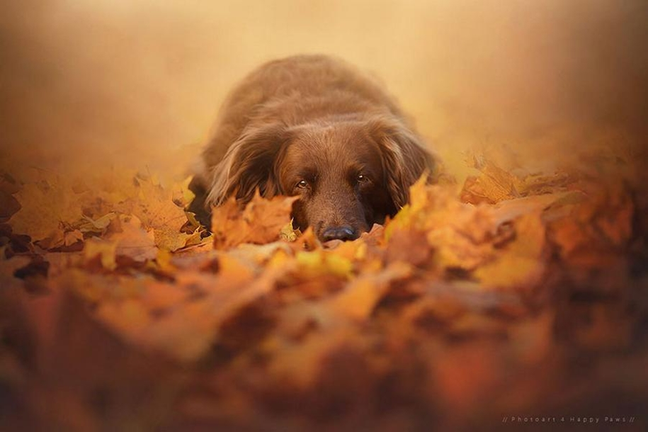 autumn-dog-photos-anne-geyer-04