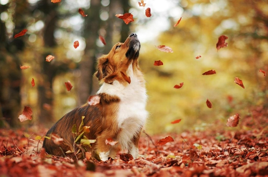 autumn-dog-photos-anne-geyer-05