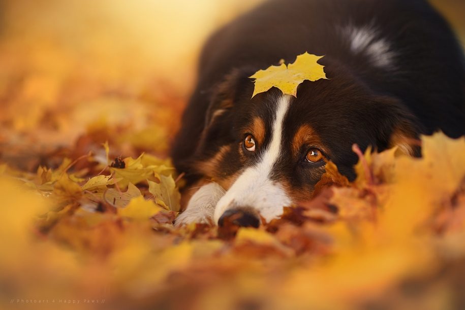 autumn-dog-photos-anne-geyer-06
