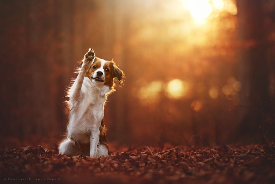 autumn-dog-photos-anne-geyer-07