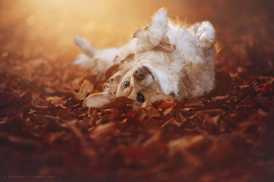 autumn-dog-photos-anne-geyer-09