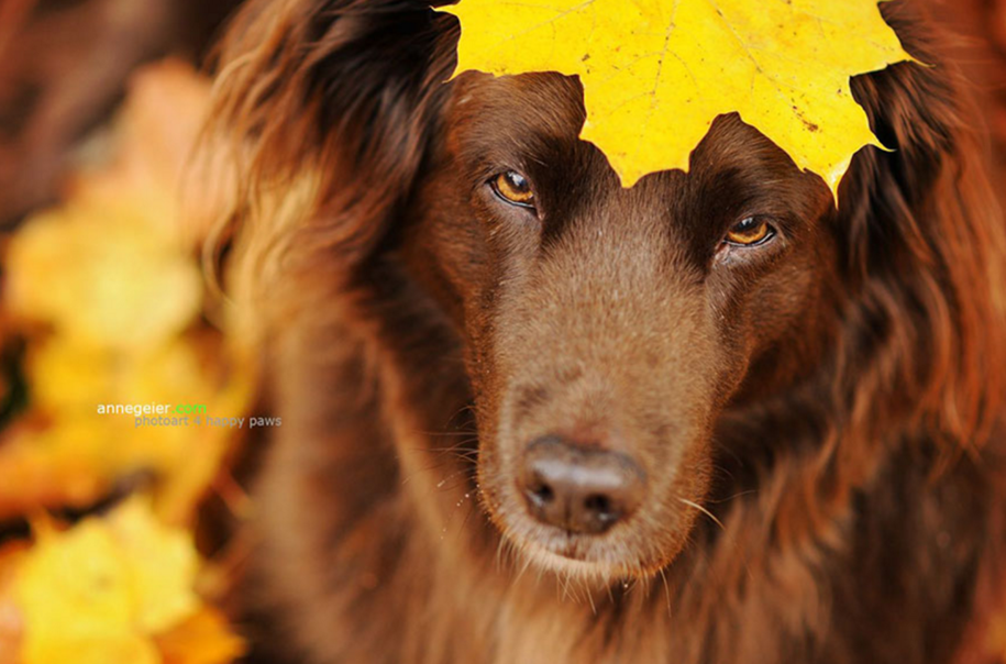 autumn-dog-photos-anne-geyer-10