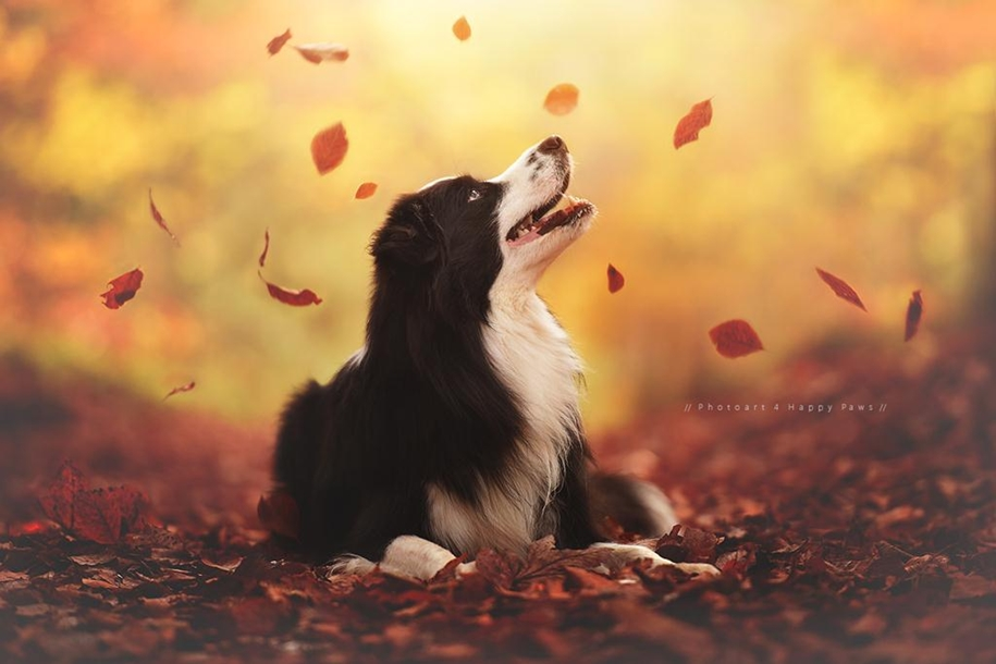 autumn-dog-photos-anne-geyer-11