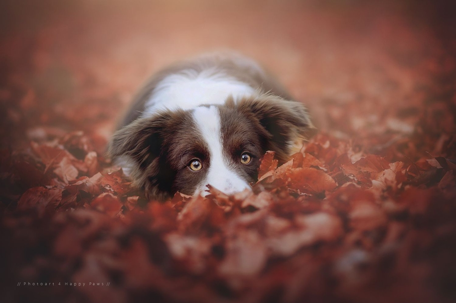 autumn-dog-photos-anne-geyer-12