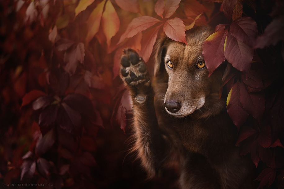 autumn-dog-photos-anne-geyer-13