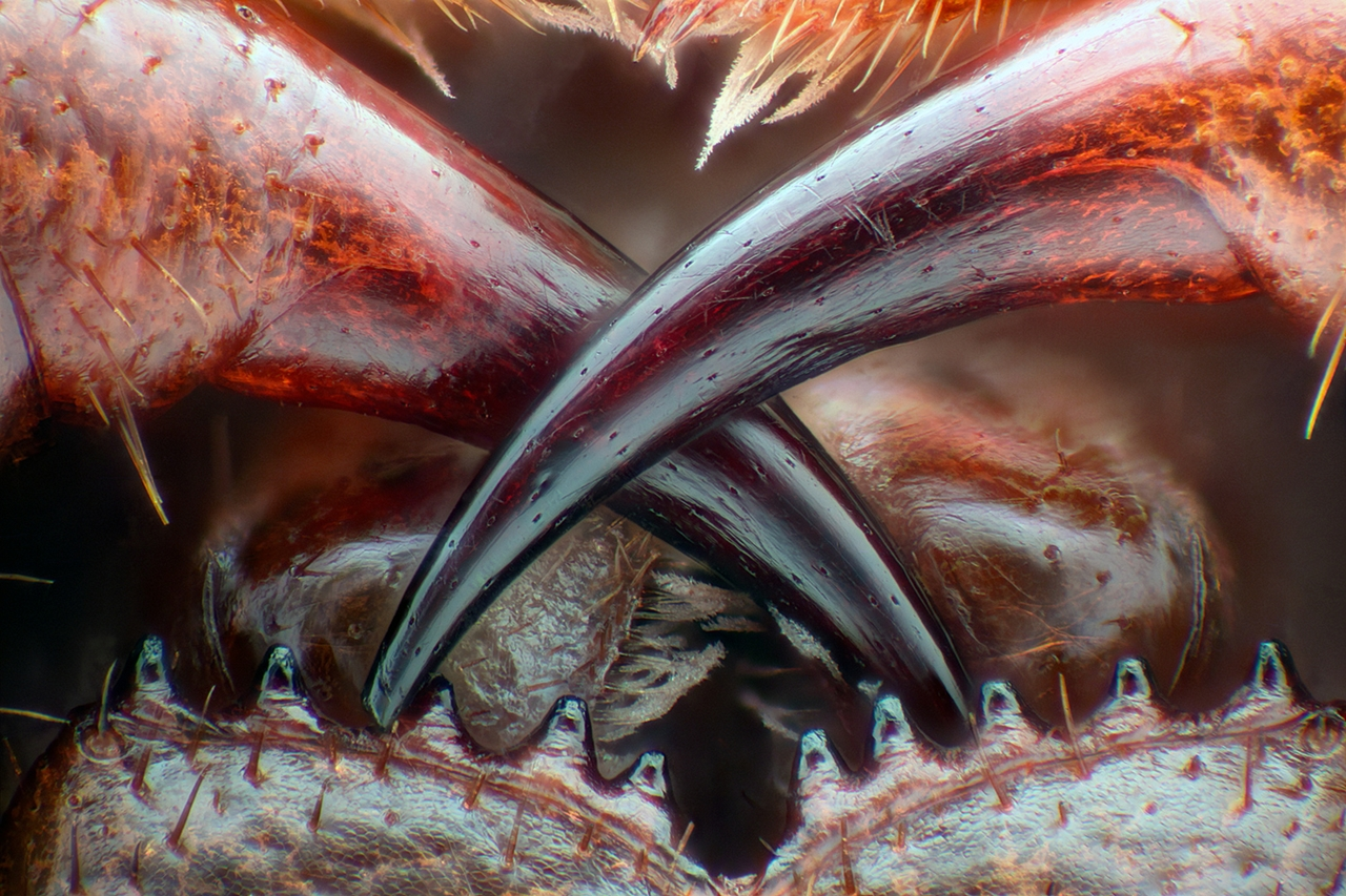 competition-micrographs-nikon-small-world-in-2016_05