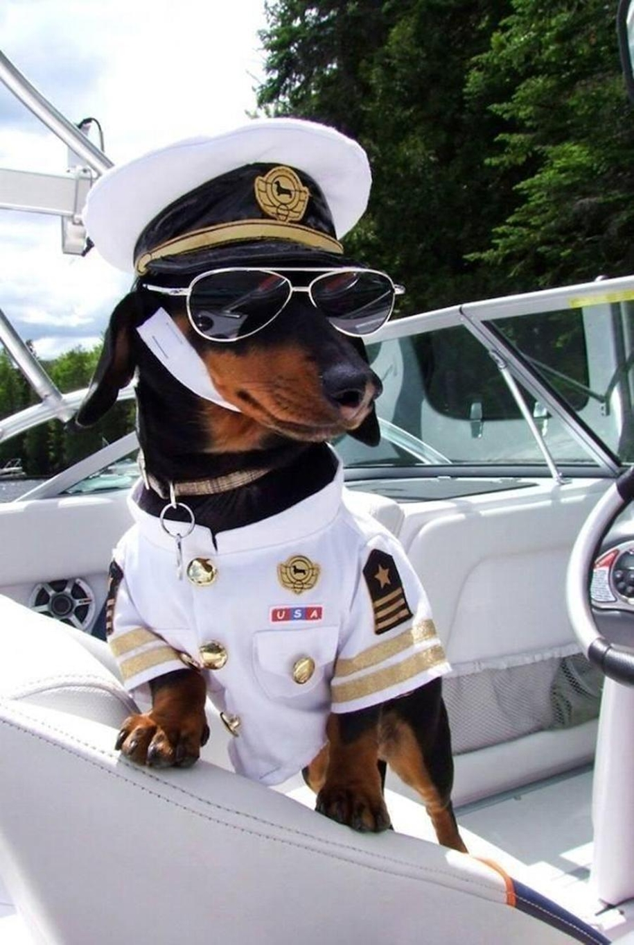 dachshund-in-funny-outfits-makes-more-money-than-the-owners-02