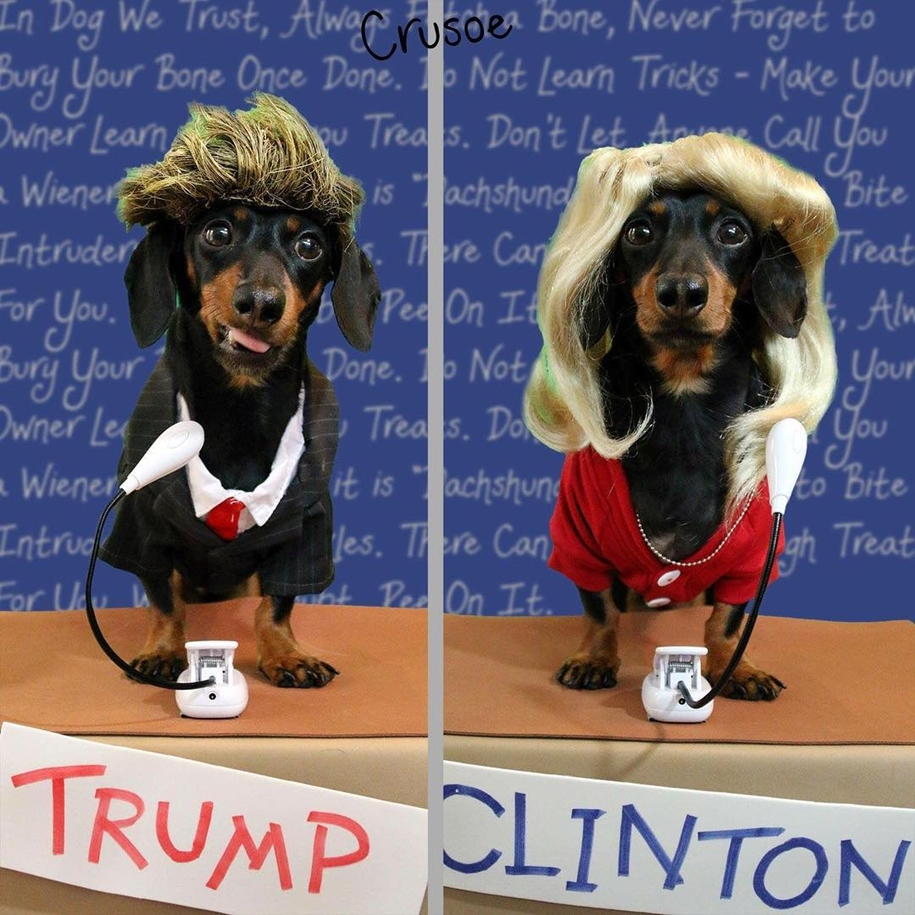 dachshund-in-funny-outfits-makes-more-money-than-the-owners-05